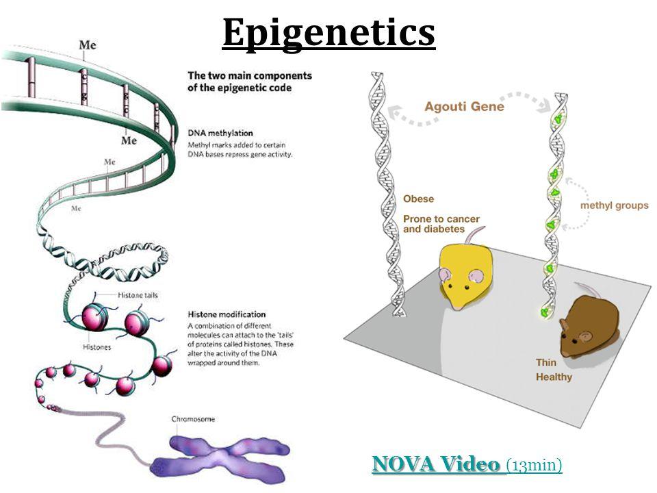 Epigenetics NOVA Video NOVA Video (13min)