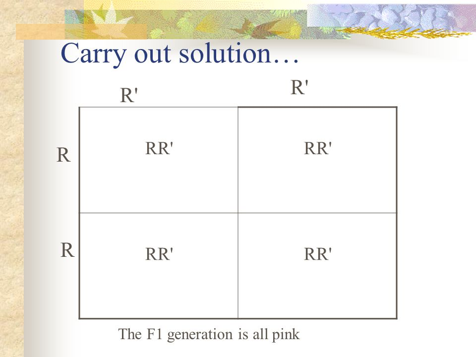 Carry out solution… RR'RR'RR'RR' RR'RR'RR'RR' R'R' R'R' R R The F1 generation is all pink