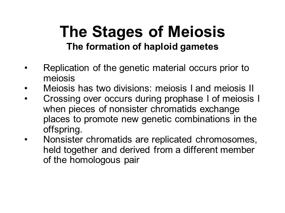 The Stages of Meiosis The formation of haploid gametes Replication of the genetic material occurs prior to meiosis Meiosis has two divisions: meiosis I and meiosis II Crossing over occurs during prophase I of meiosis I when pieces of nonsister chromatids exchange places to promote new genetic combinations in the offspring.