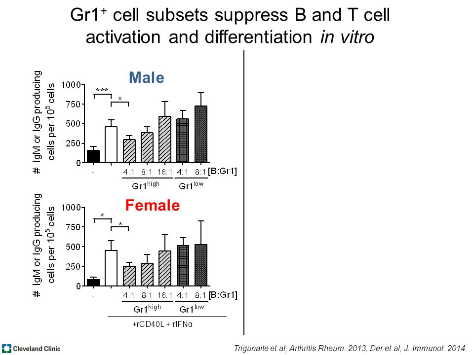 Male Female +rCD40L + rIFNα Trigunaite et al, Arthritis Rheum.
