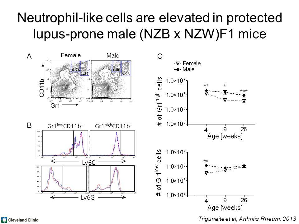 CD11b Gr1 Female Male Trigunaite et al, Arthritis Rheum.