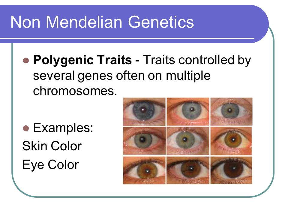 Non Mendelian Genetics Polygenic Traits - Traits controlled by several genes often on multiple chromosomes. Examples: Skin Color Eye Color