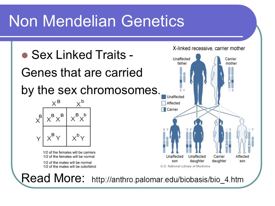 Non Mendelian Genetics Sex Linked Traits - Genes that are carried by the sex chromosomes. Read More: http://anthro.palomar.edu/biobasis/bio_4.htm