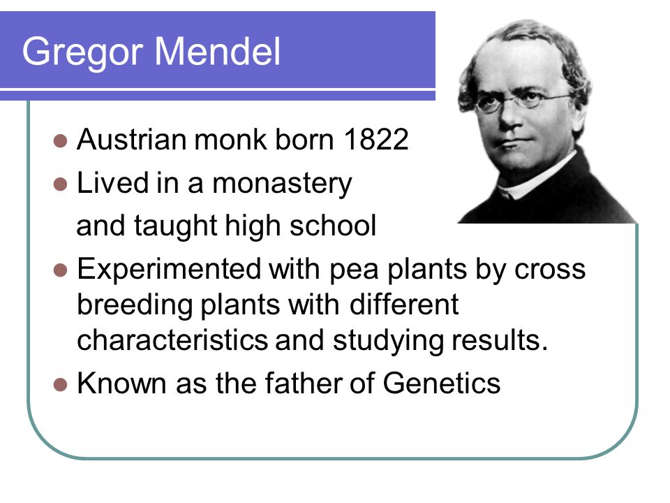 Gregor Mendel Austrian monk born 1822 Lived in a monastery and taught high school Experimented with pea plants by cross breeding plants with different