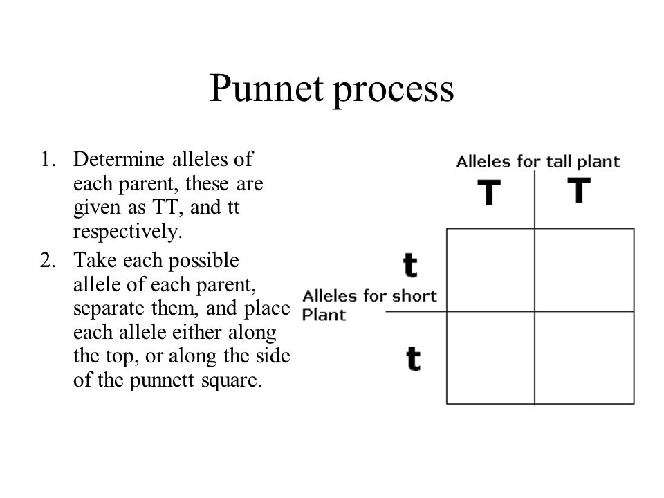Punnet process 1.Determine alleles of each parent, these are given as TT, and tt respectively. 2.Take each possible allele of each parent, separate th