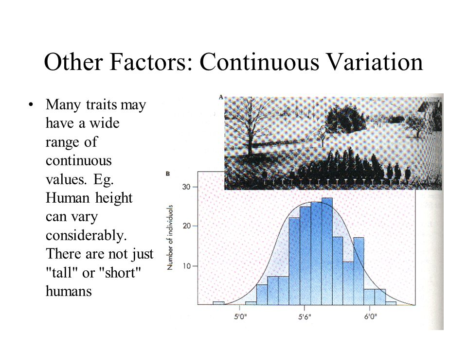 Other Factors: Continuous Variation Many traits may have a wide range of continuous values. Eg. Human height can vary considerably. There are not just