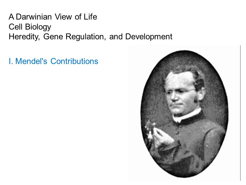 A Darwinian View of Life Cell Biology Heredity, Gene Regulation, and Development I.