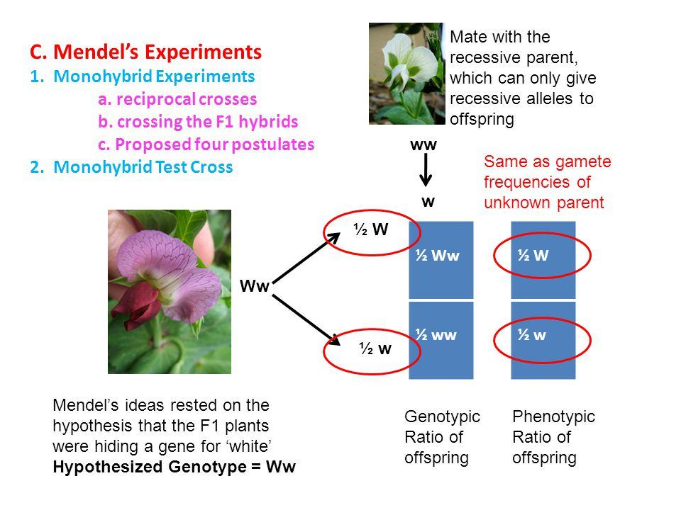 C. Mendel's Experiments 1. Monohybrid Experiments a. reciprocal crosses b. crossing the F1 hybrids c. Proposed four postulates 2. Monohybrid Test Cros