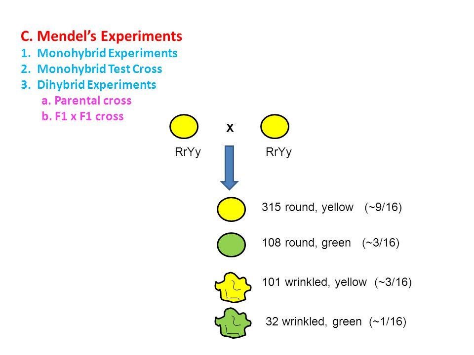 C. Mendel's Experiments 1. Monohybrid Experiments 2. Monohybrid Test Cross 3. Dihybrid Experiments a. Parental cross b. F1 x F1 cross 315 round, yello