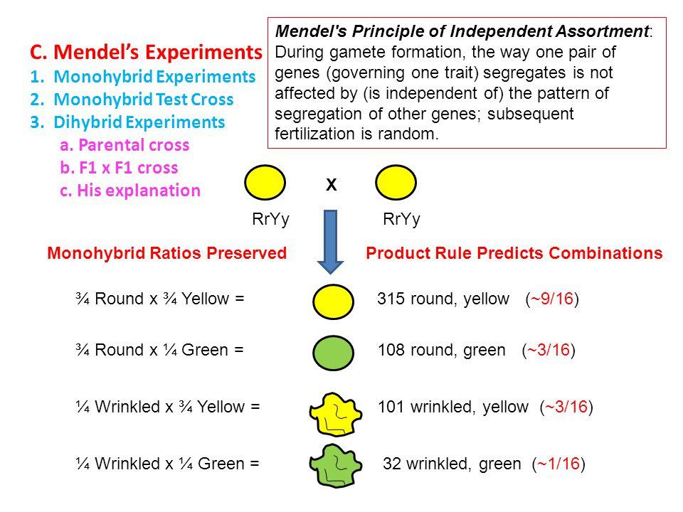 C. Mendel's Experiments 1. Monohybrid Experiments 2. Monohybrid Test Cross 3. Dihybrid Experiments a. Parental cross b. F1 x F1 cross c. His explanati