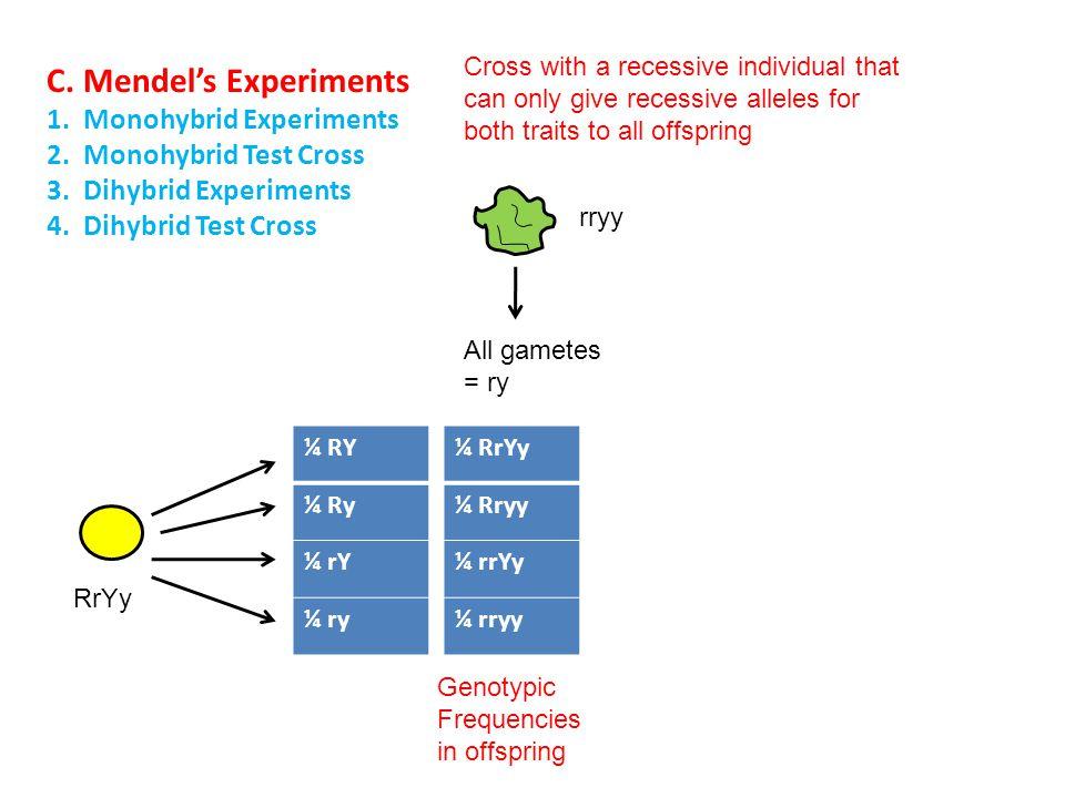 C. Mendel's Experiments 1. Monohybrid Experiments 2. Monohybrid Test Cross 3. Dihybrid Experiments 4. Dihybrid Test Cross Cross with a recessive indiv