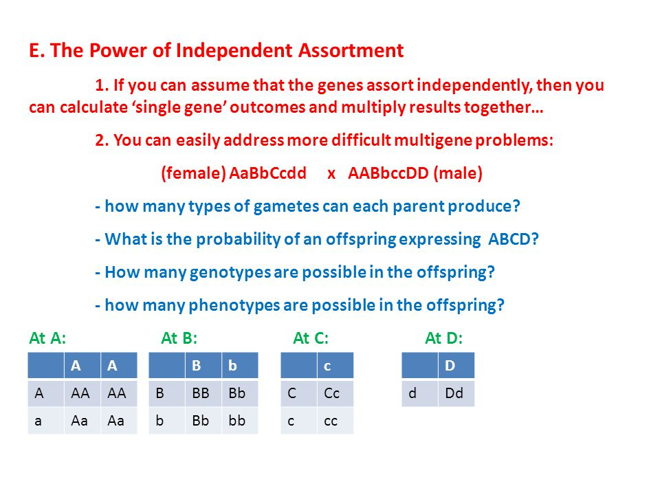 E. The Power of Independent Assortment 1.