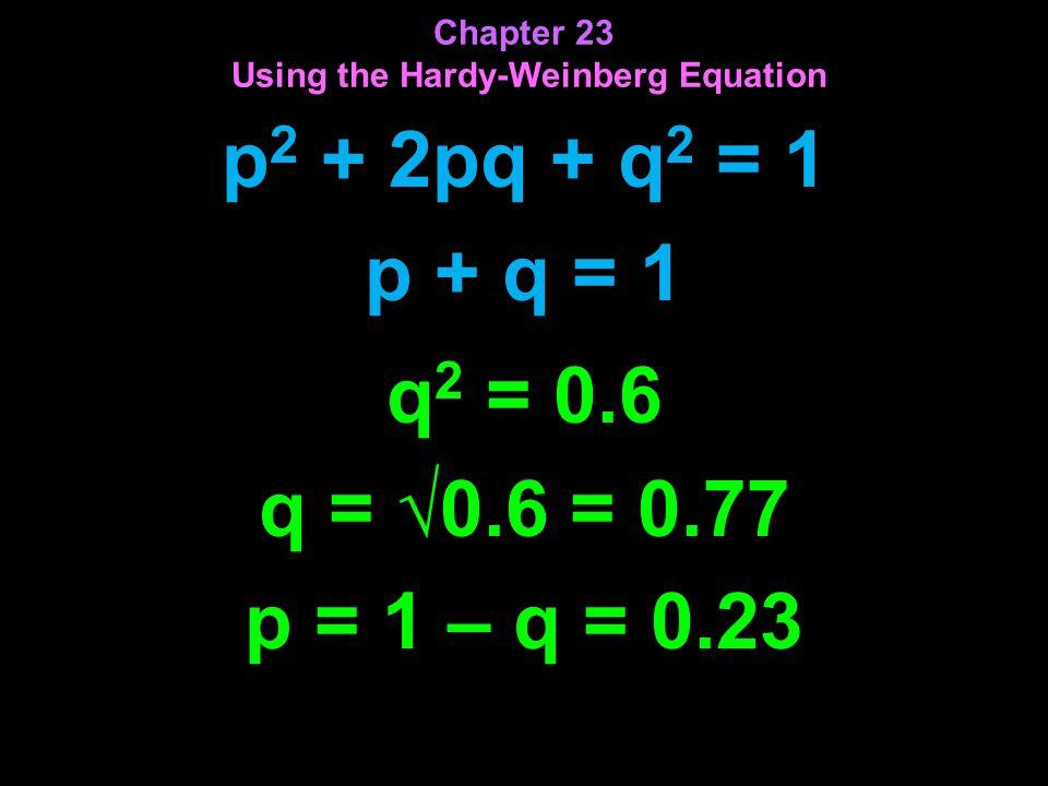 p 2 + 2pq + q 2 = 1 p + q = 1 Chapter 23 Using the Hardy-Weinberg Equation q 2 = 0.6 q = √0.6 = 0.77 p = 1 – q = 0.23