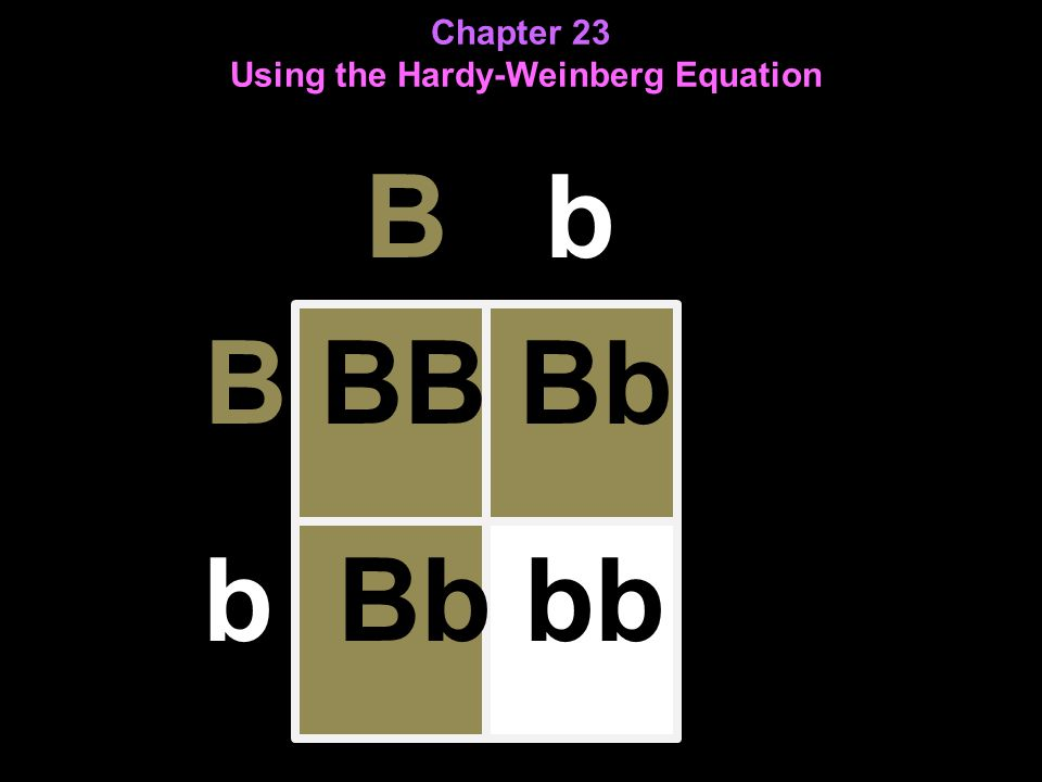 Chapter 23 Using the Hardy-Weinberg Equation B b B BB Bb b Bb bb