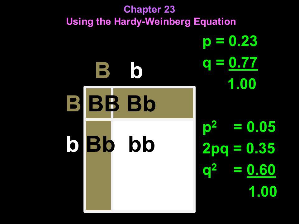 Chapter 23 Using the Hardy-Weinberg Equation B b B BB Bb b Bb bb p = 0.23 q = 0.77 1.00 p 2 = 0.05 2pq = 0.35 q 2 = 0.60 1.00