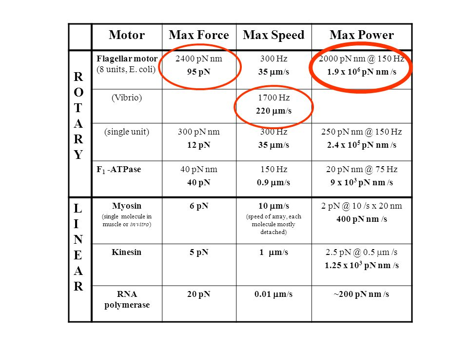 MotorMax ForceMax SpeedMax Power ROTARY ROTARY Flagellar motor (8 units, E.