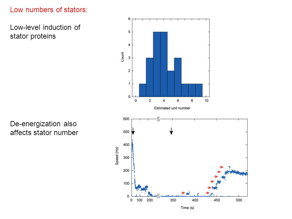 Low numbers of stators: Low-level induction of stator proteins De-energization also affects stator number