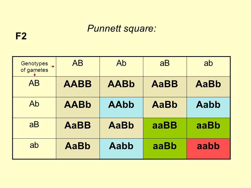 F2 ABAbaBab AB AABBAABbAaBBAaBb Ab AABbAAbbAaBbAabb aB AaBBAaBbaaBBaaBb ab AaBbAabbaaBbaabb Genotypes of gametes Punnett square: