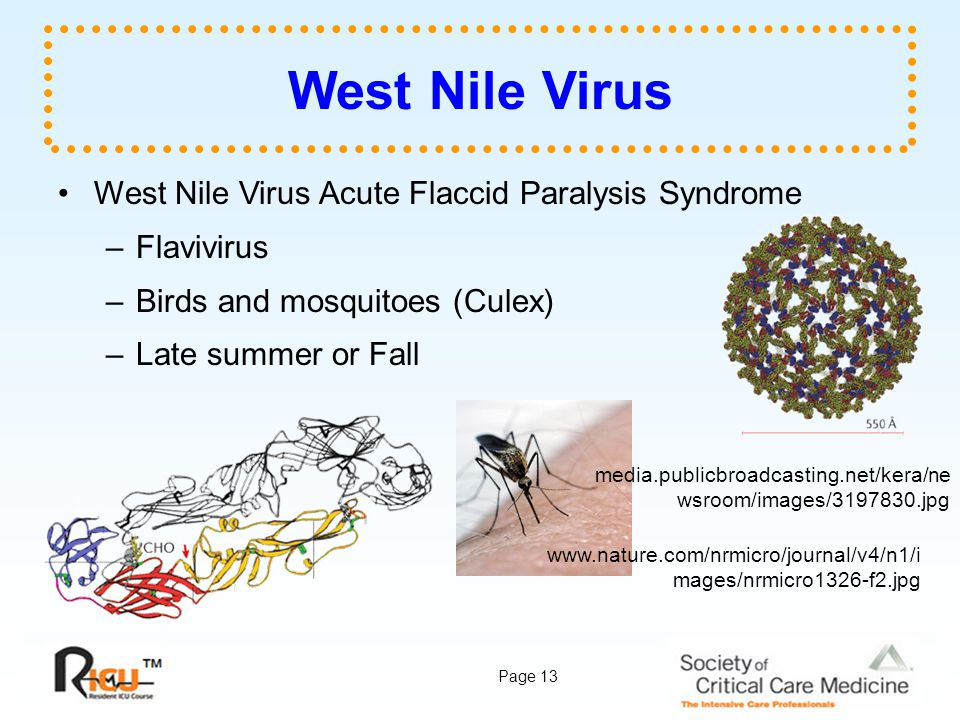 Page 13 West Nile Virus West Nile Virus Acute Flaccid Paralysis Syndrome –Flavivirus –Birds and mosquitoes (Culex) –Late summer or Fall media.publicbr