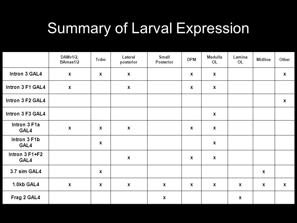 Summary of Larval Expression DAMv1/2, BAmas1/2 Trdm Lateral posterior Small Posterior DPM Medulla OL Lamina OL MidlineOther Intron 3 GAL4xxx xx x Intron 3 F1 GAL4x x xx Intron 3 F2 GAL4 x Intron 3 F3 GAL4 x Intron 3 F1a GAL4 xxx xx Intron 3 F1b GAL4 x x Intron 3 F1+F2 GAL4 x xx 3.7 sim GAL4 x x 1.0kb GAL4xxxxxxxxx Frag 2 GAL4 x x