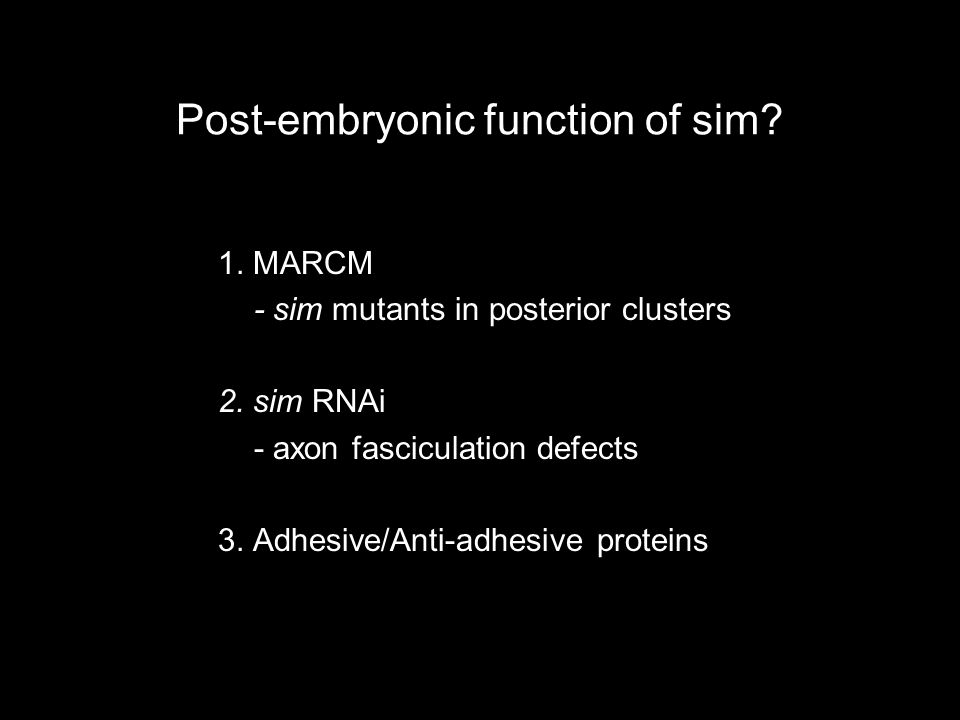Post-embryonic function of sim. 1. MARCM - sim mutants in posterior clusters 2.