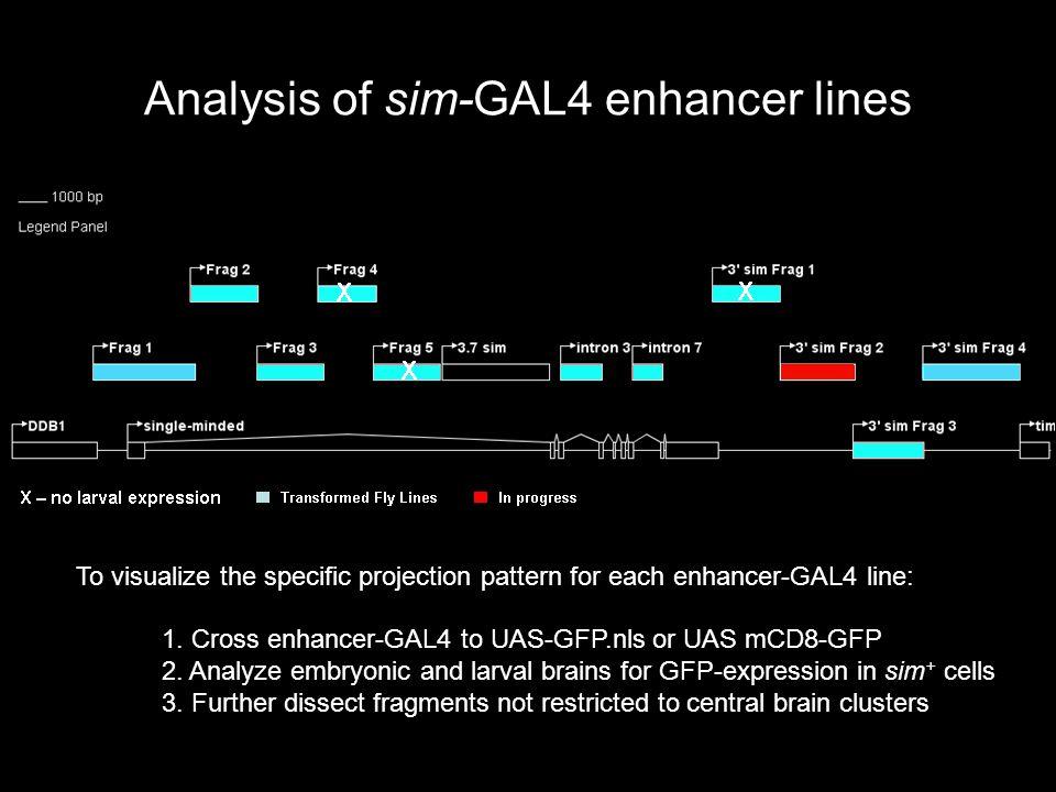 Axons in late sim mutant DAMv1/2 Trdm BAmas1/2 sim BP106 Trdm? BAmas1/2? WT sim H9 /Df(3R)ry 75