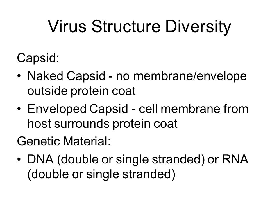 Virus Structure Diversity Capsid: Naked Capsid - no membrane/envelope outside protein coat Enveloped Capsid - cell membrane from host surrounds protein coat Genetic Material: DNA (double or single stranded) or RNA (double or single stranded)