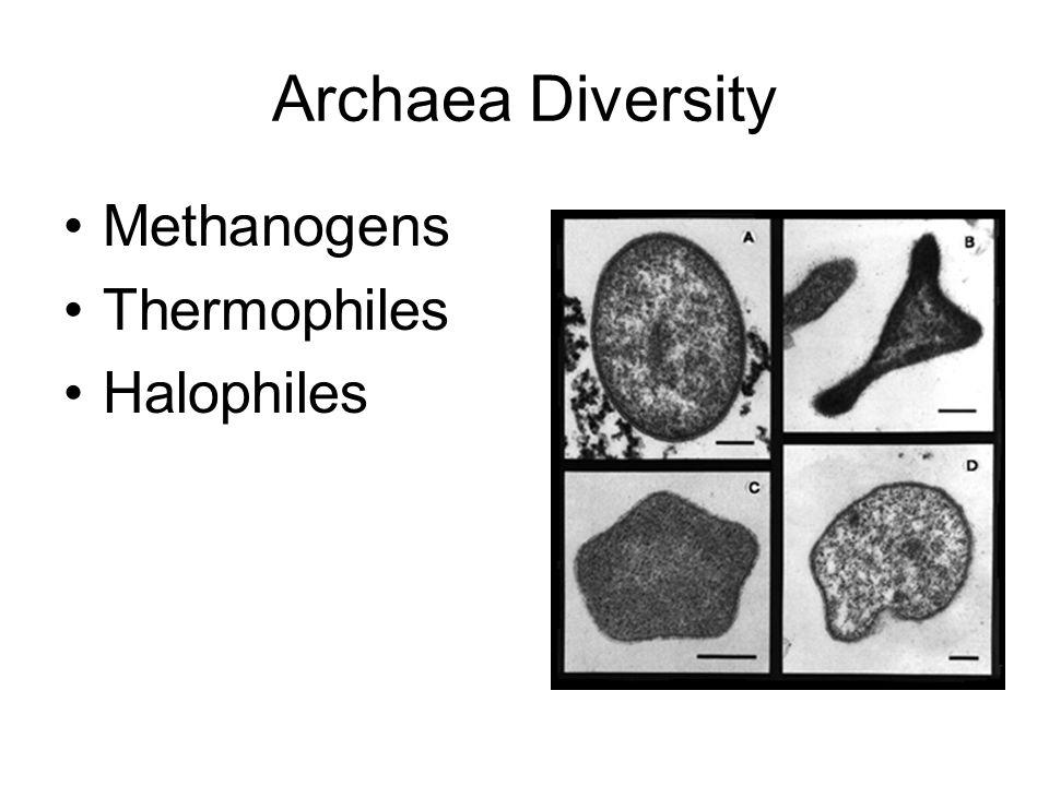 Archaea Diversity Methanogens Thermophiles Halophiles