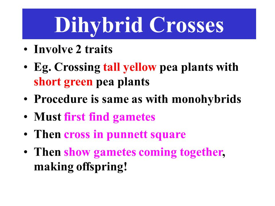 Dihybrid Crosses Involve 2 traits Eg.