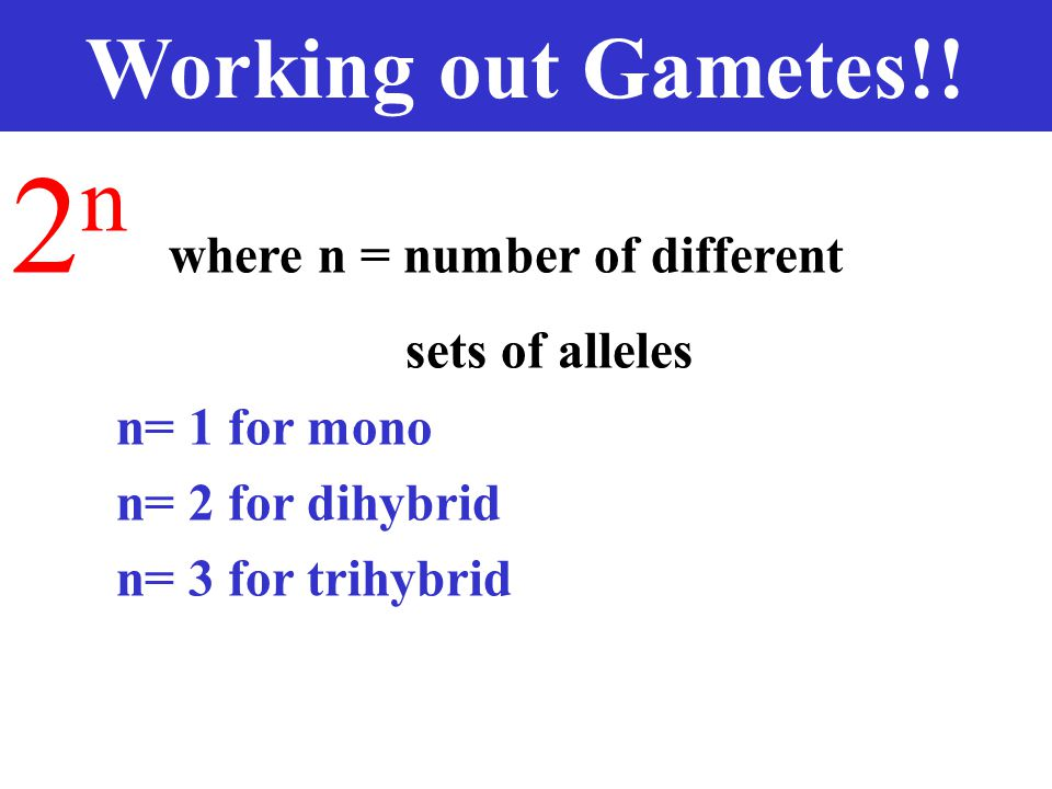 Working out Gametes!.