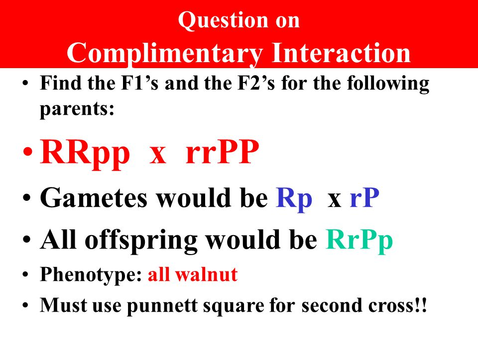 Question on Complimentary Interaction Find the F1's and the F2's for the following parents: RRpp x rrPP Gametes would be Rp x rP All offspring would be RrPp Phenotype: all walnut Must use punnett square for second cross!!
