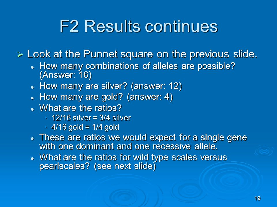 19 F2 Results continues  Look at the Punnet square on the previous slide. How many combinations of alleles are possible? (Answer: 16) How many combin