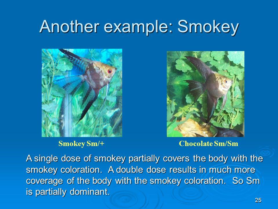 25 Another example: Smokey Smokey Sm/+Chocolate Sm/Sm A single dose of smokey partially covers the body with the smokey coloration.