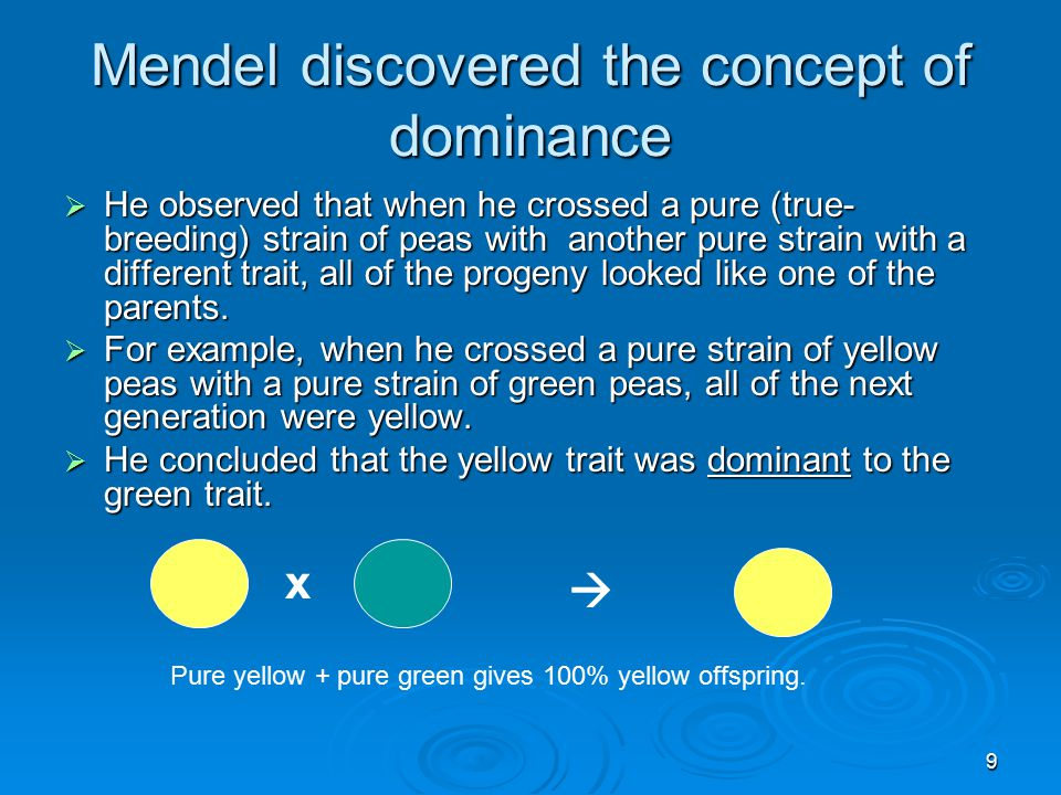 9 Mendel discovered the concept of dominance  He observed that when he crossed a pure (true- breeding) strain of peas with another pure strain with a