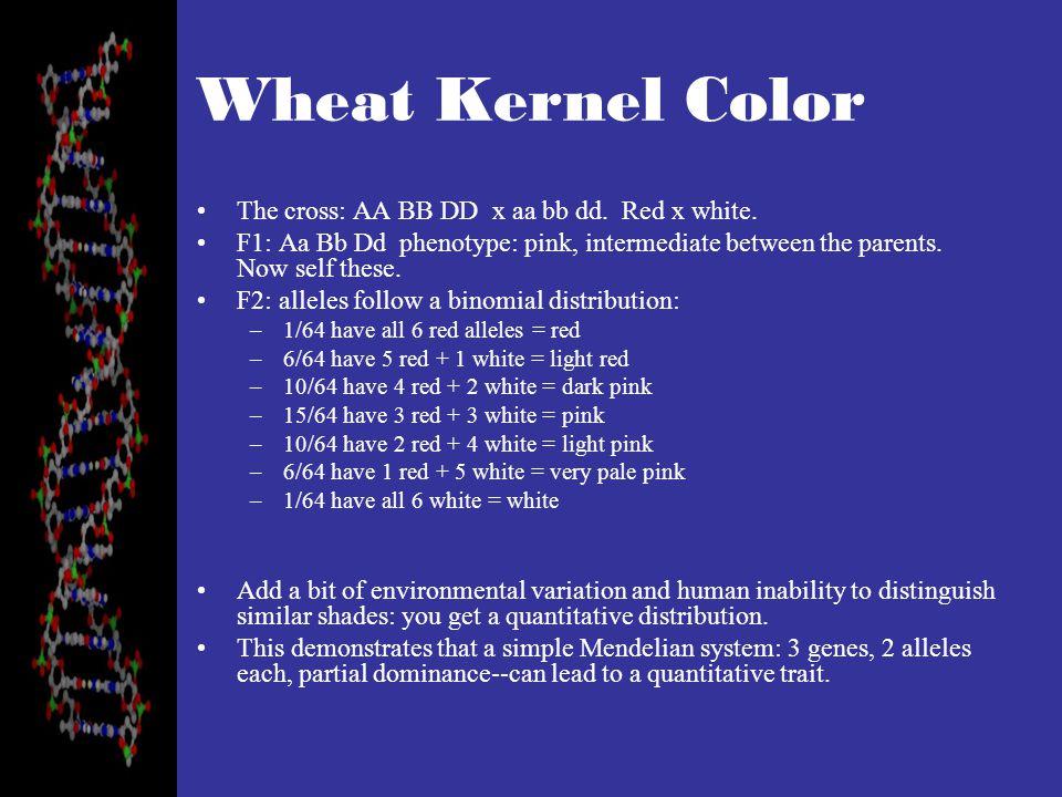 Wheat Kernel Color The cross: AA BB DD x aa bb dd.