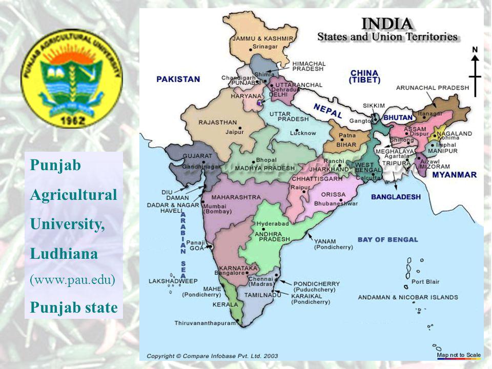 Punjab Agricultural University, Ludhiana (www.pau.edu) Punjab state