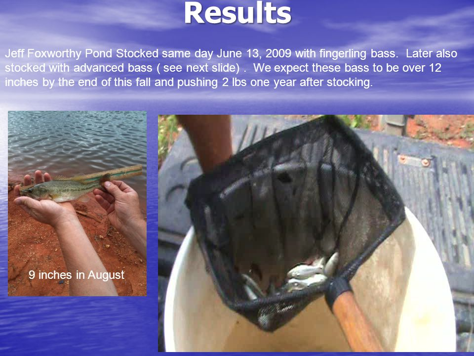 Results Jeff Foxworthy Pond Stocked same day June 13, 2009 with fingerling bass.