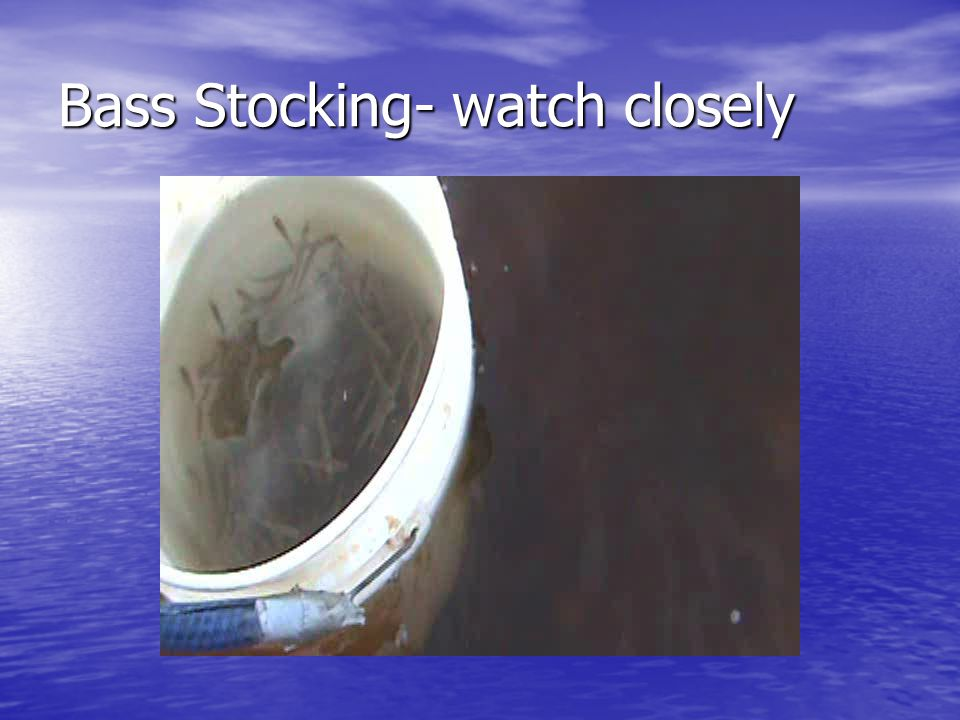Bass Stocking- watch closely