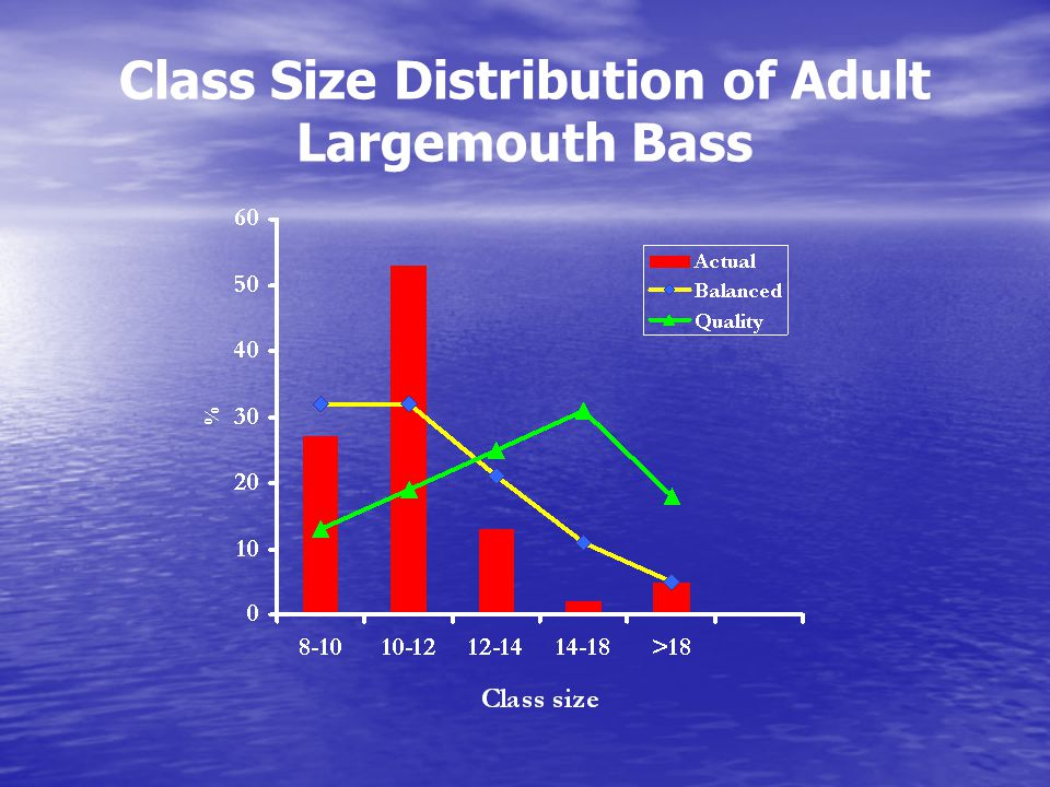 Class Size Distribution of Adult Largemouth Bass