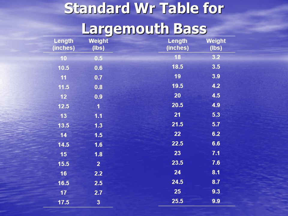 Standard Wr Table for Largemouth Bass Length (inches) Weight (lbs) 100.5 10.50.6 110.7 11.50.8 120.9 12.51 131.1 13.51.3 141.5 14.51.6 151.8 15.52 162.2 16.52.5 172.7 17.53 Length (inches) Weight (lbs) 183.2 18.53.5 193.9 19.54.2 204.5 20.54.9 215.3 21.55.7 226.2 22.56.6 237.1 23.57.6 248.1 24.58.7 259.3 25.59.9