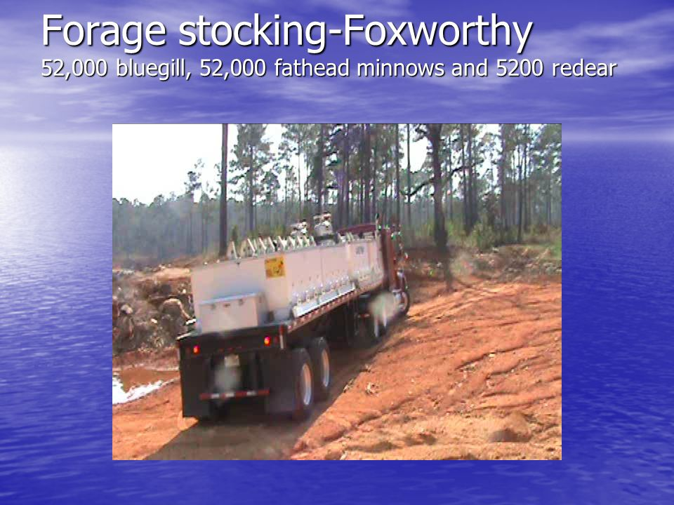 Forage stocking-Foxworthy 52,000 bluegill, 52,000 fathead minnows and 5200 redear