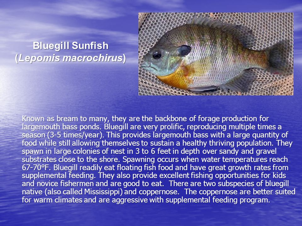 Fertilization Shades out vegetation Shades out vegetation Increases pond's fishery production Increases pond's fishery production Provides nice color when performed properly Provides nice color when performed properly