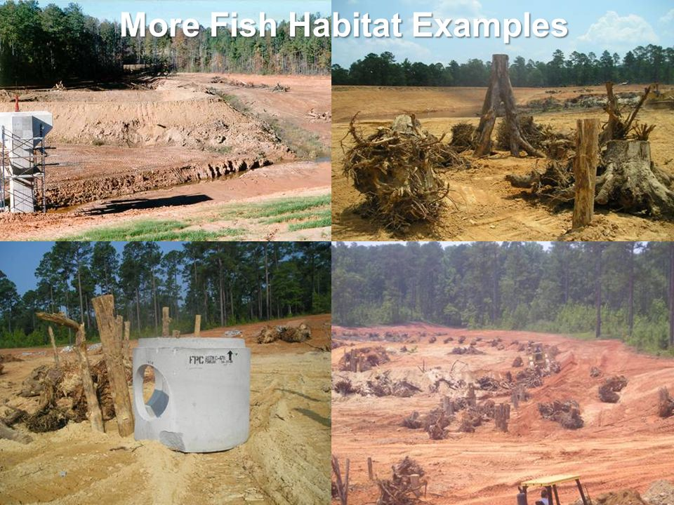 More Fish Habitat Examples