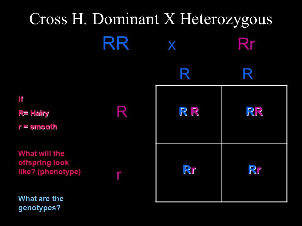 Cross H.