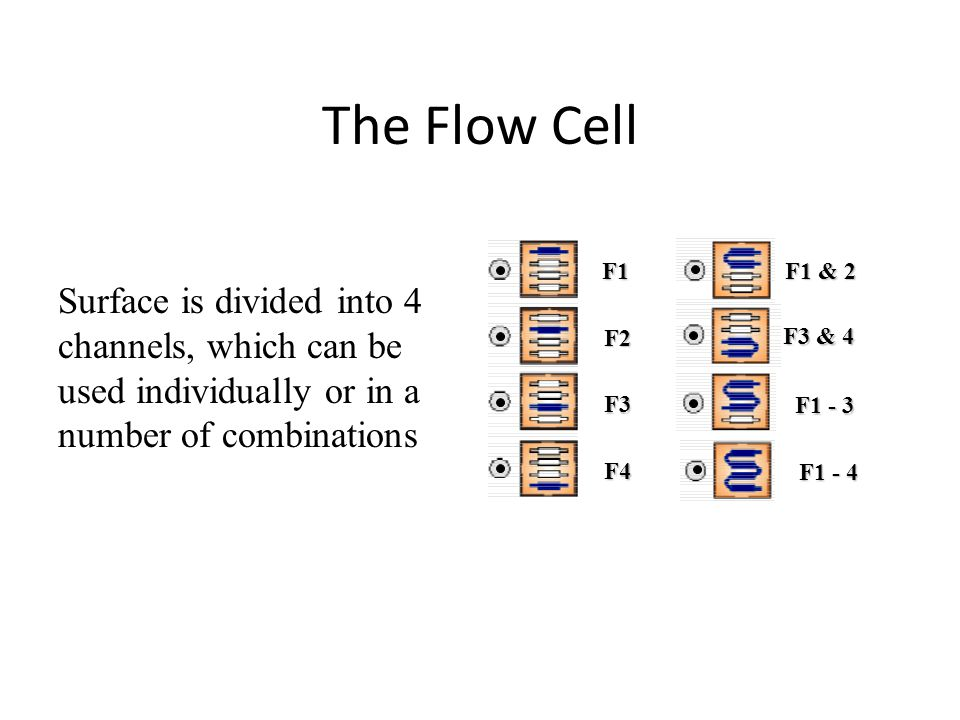 The Flow Cell F1 F2 F3 F4 F1 & 2 F3 & 4 F1 - 3 F1 - 4 Surface is divided into 4 channels, which can be used individually or in a number of combinations