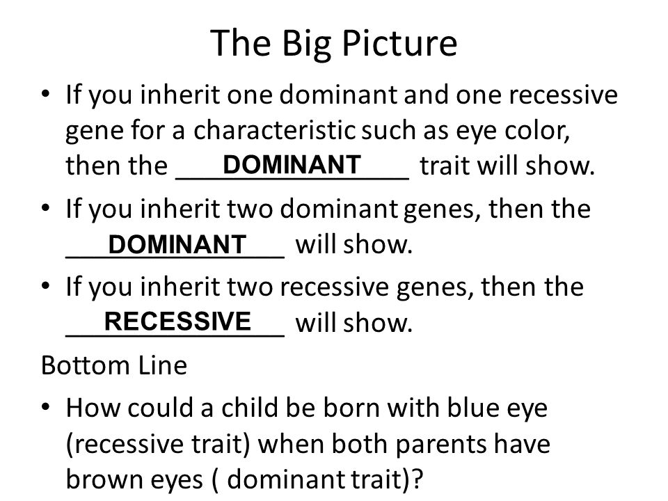 The Big Picture If you inherit one dominant and one recessive gene for a characteristic such as eye color, then the ________________ trait will show.