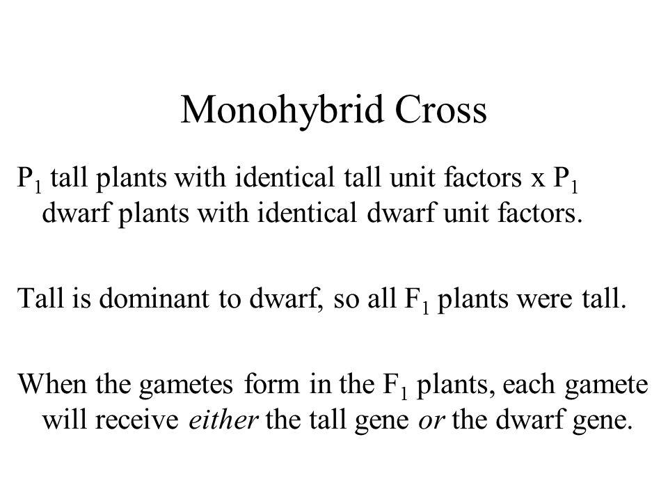 Monohybrid Cross P 1 tall plants with identical tall unit factors x P 1 dwarf plants with identical dwarf unit factors.