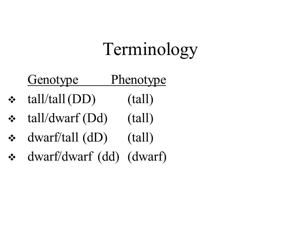 Terminology Genotype Phenotype  tall/tall(DD)(tall)  tall/dwarf (Dd)(tall)  dwarf/tall (dD)(tall)  dwarf/dwarf(dd)(dwarf)