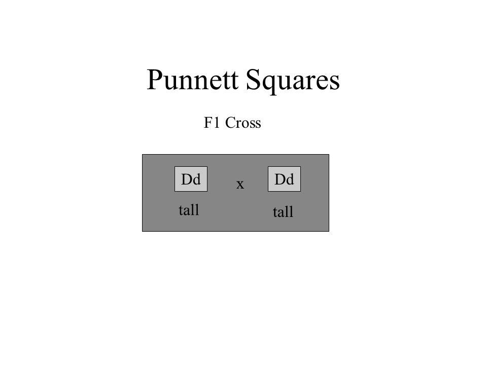 Punnett Squares F1 Cross Dd x tall