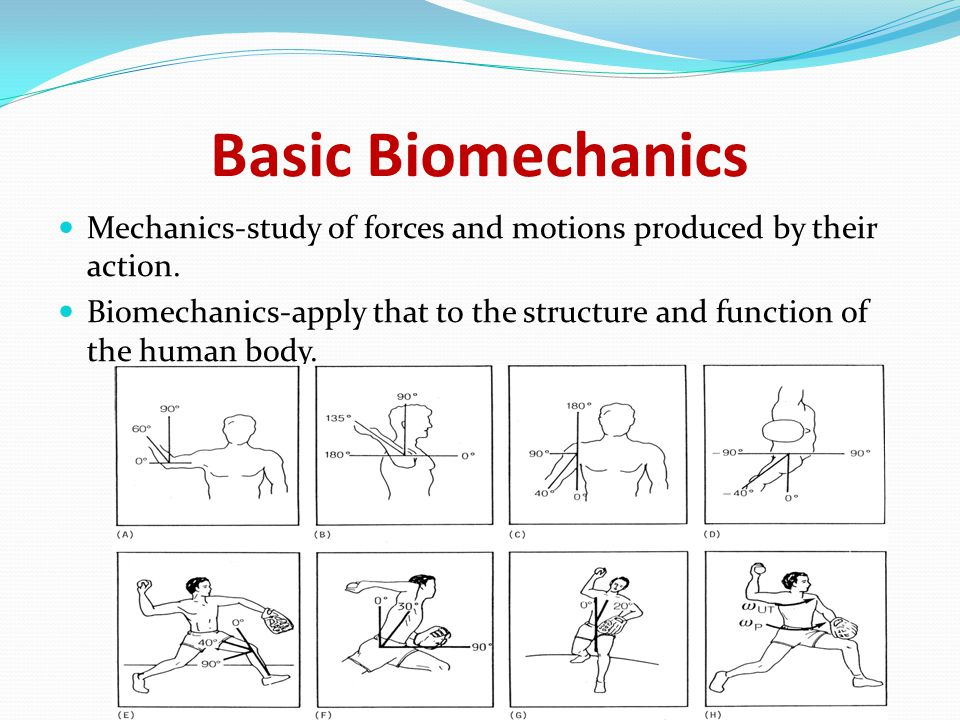 Basic Biomechanics Anatomical Reference position : Erect standing position with all body parts, including the palms of the hands, facing forward; considered the starting position for body segment movements Chaitali prabhudesai